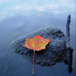 Reflection of Self Belief
