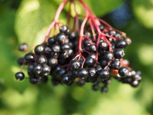 Beat a Cold or Flu Fast-Elderberry