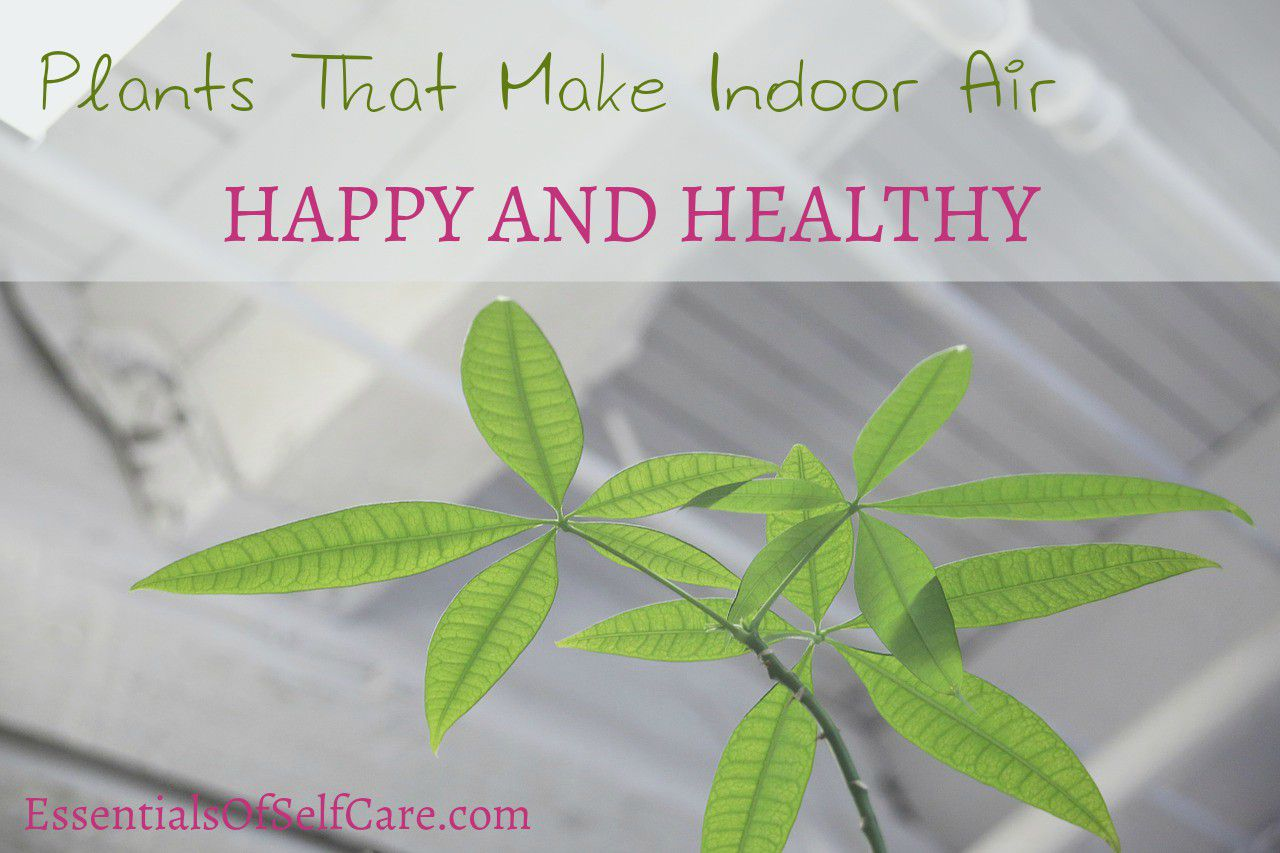 12 Plants That Improve Indoor Air Quality