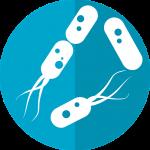 Top Rated Probiotics-Flora